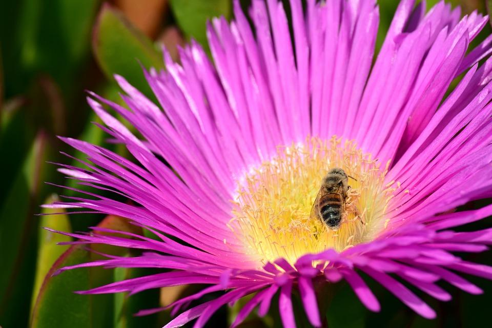 Blossom, Bloom, Bee, Cactus, Mediterranean