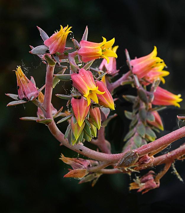 Flowers, Cactus, Nature, Plants, Garden, Green