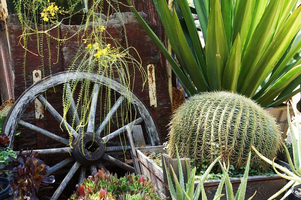 Nursery, Plants, Cactus, Green, Vintage, Wheel, Nature