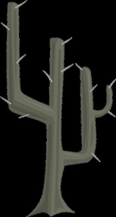 Cactus, Plant, Natural, Desert, Nature, Botany