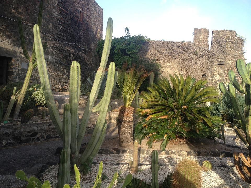 Succulent Plant, Cactus, Garden, Nature, Thorns, Vases