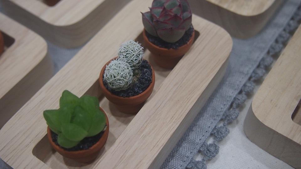 Cactus, Potted Plant, Cactus Photo, Nature