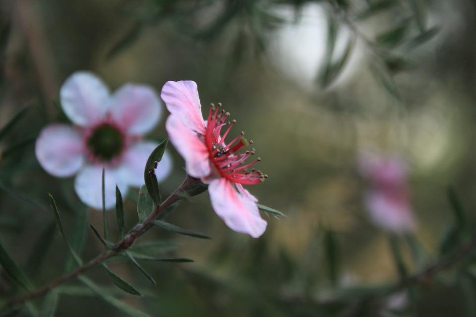 Flowers, Cactus, Plants, Garden, Nature, Greenhouse