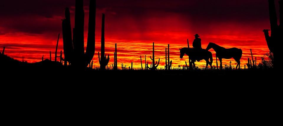 Sunset, America, Park, Cactus Saguaro, Western