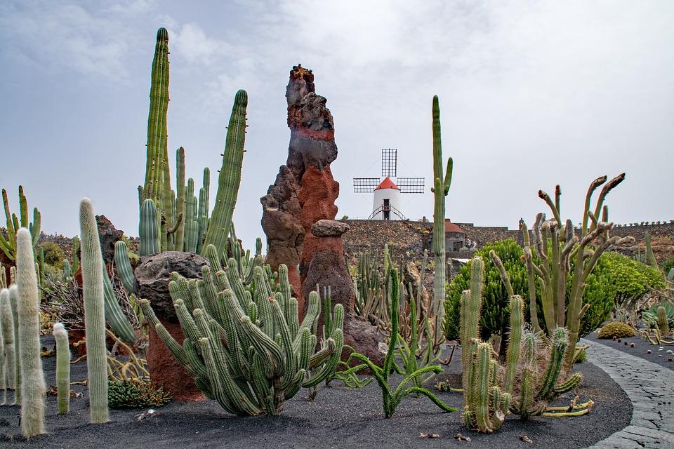 Free photo Cactus Spain Lanzarote Jardin De Cactus Max Pixel