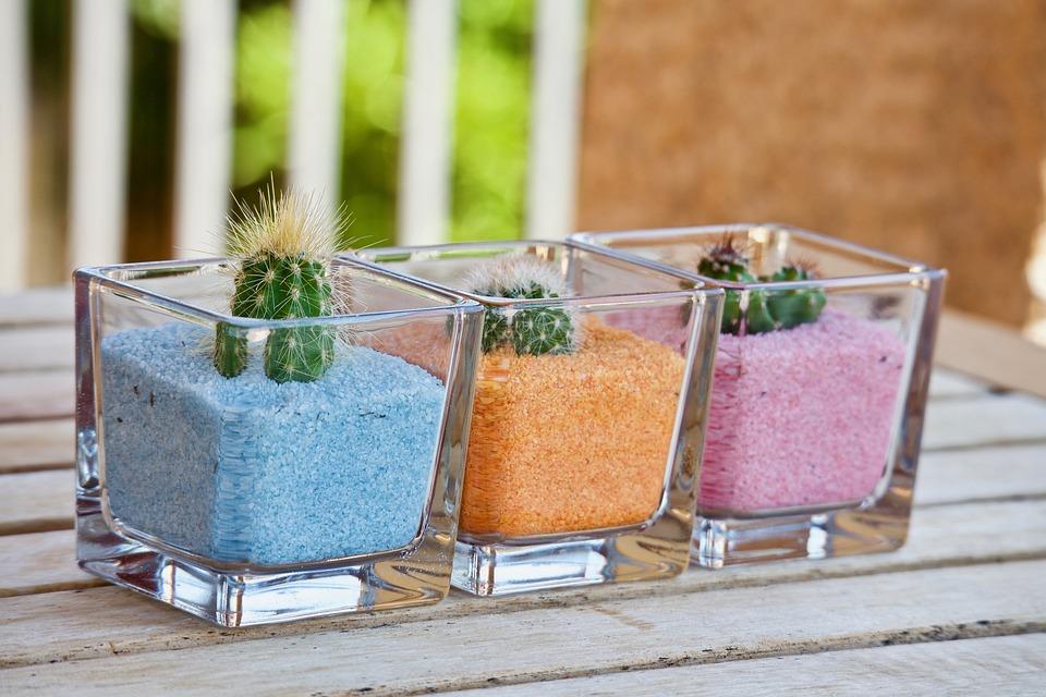 Fat Plants, Cactus, Nature, Garden, Terrace, Thorns