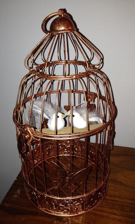 Cage, Bird, Couple Birds