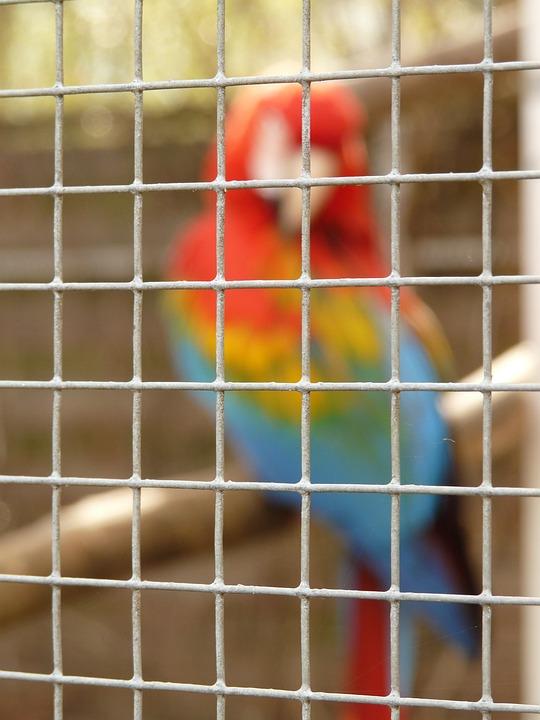 Grid, Imprisoned, Parrot, Prison, Animal, Bird, Cage