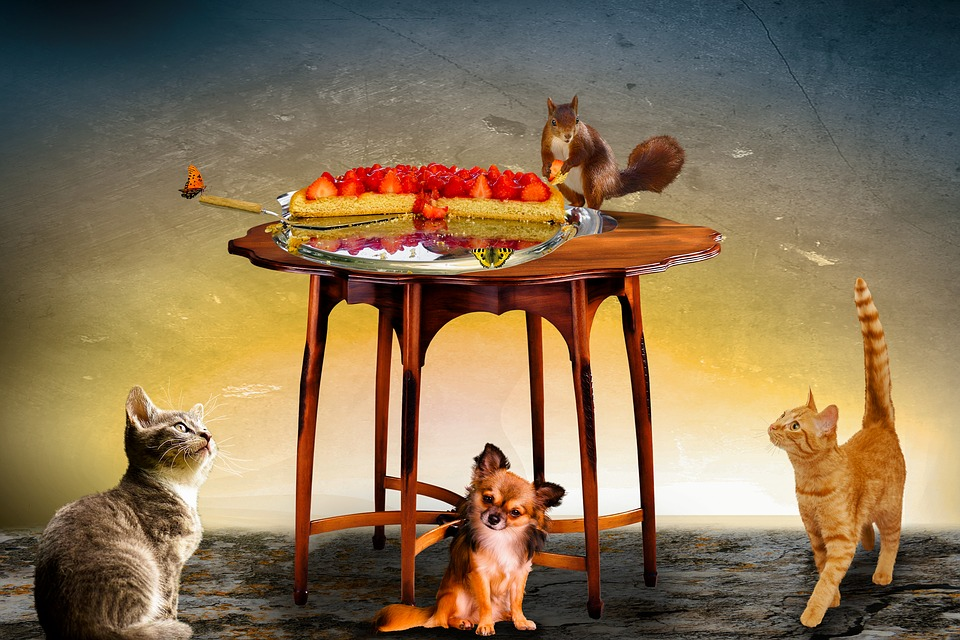 Animals, Composing, Cat, Dog, Squirrel, Butterfly, Cake