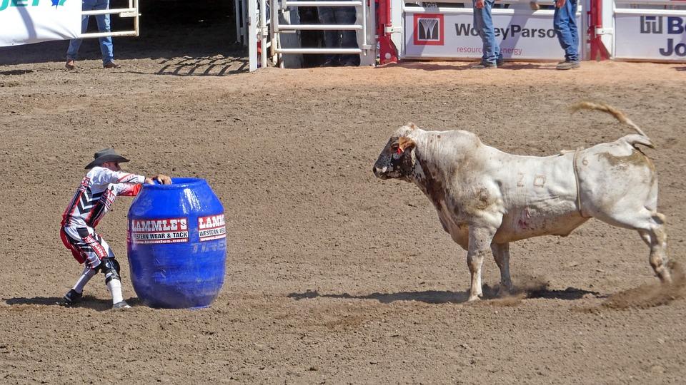 Bull, Human, Animal, Ruminant, Calgary Stampede, Canada