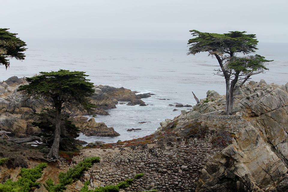 California, Cypress Tree, 17 Mile Drive