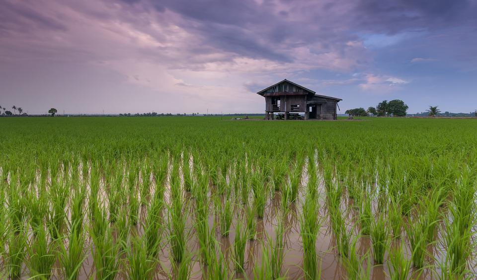 Beautiful, Best, Calm, Cottage, Farmer, Feeling, Hobby