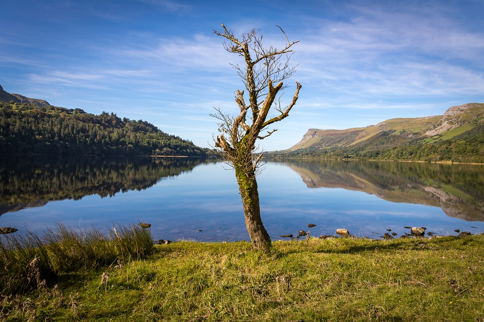 Ireland, Leitrim, Glencar, Lake, Water, Tree, Calm