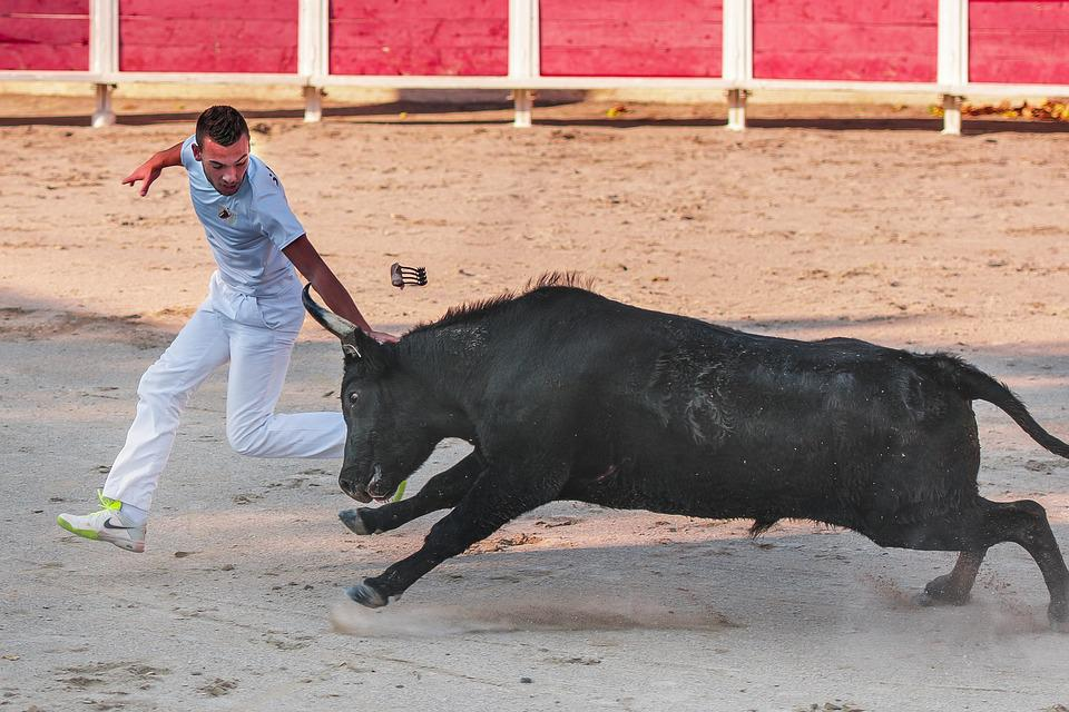 Raseteur, Camargue Race, Bull, Black, Horn, Cattle