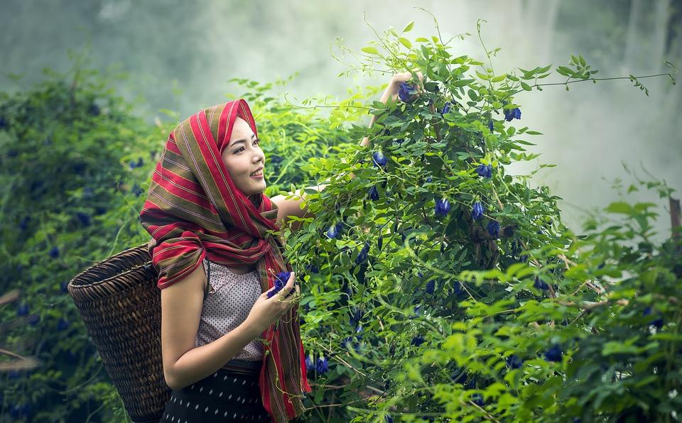 Agriculture, Cambodia, Culture, Farmer, Woman, Girl