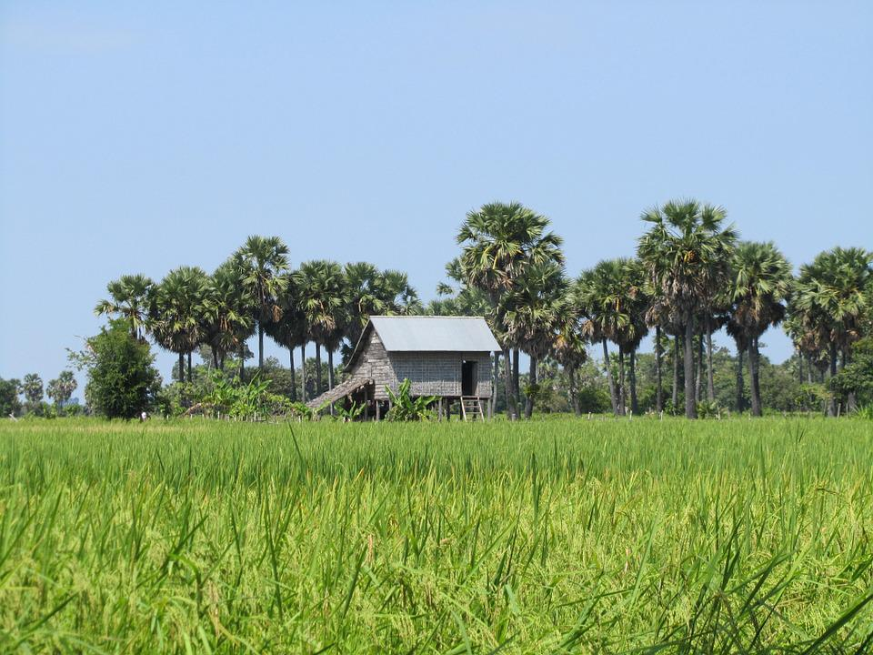 Landscape, Green Field, House, Palms, Cambodia