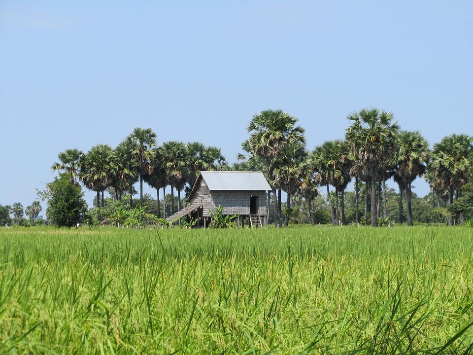 Landscape, Green Field, House, Palms, Cambodia
