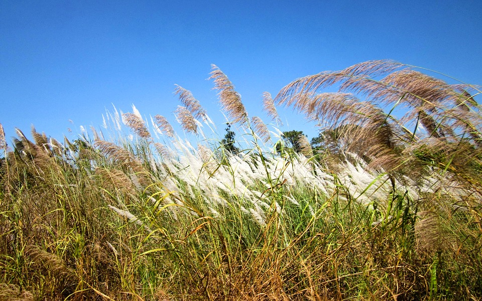 Cambodia, Grass, Nature, Sky
