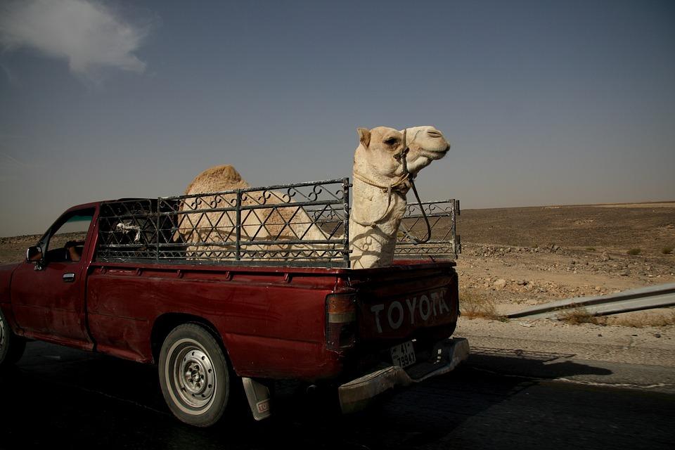 Camel, Truck, Jordan, Desert, Middle East, Transport