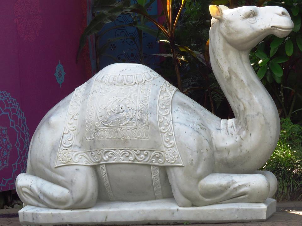 Camel, Idol, White