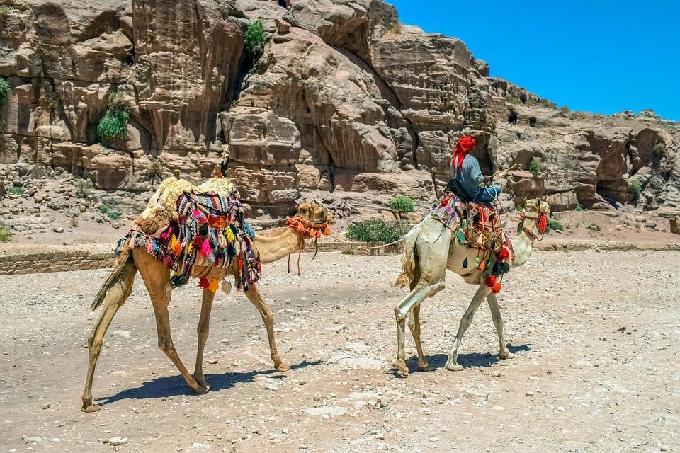 Camels, Camelliers, Al Siq Canyon, Heat, Summer, Desert