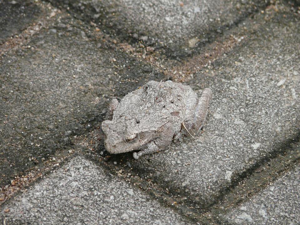 Toad, Camouflage, Hide, Discrete, Adapt, Tune In