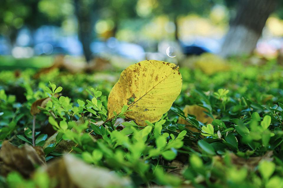 Campus, Autumn, Defoliation, Leaf, Ground, Yellow