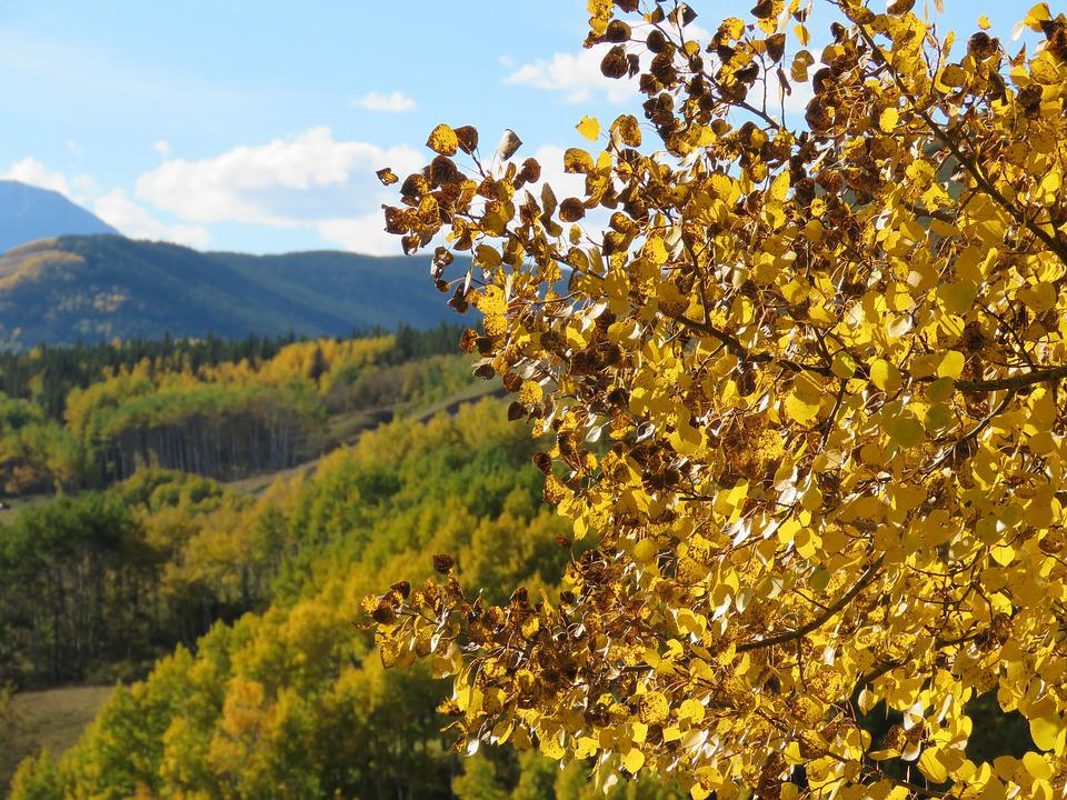 Forest, Autumn, Leaves, Nature, Landscape, Tree, Canada