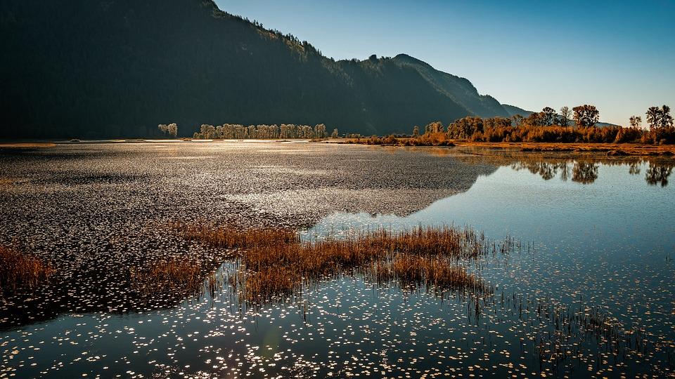Marsh, Pitt Lake, Pitt Meadows, Canada, Lake