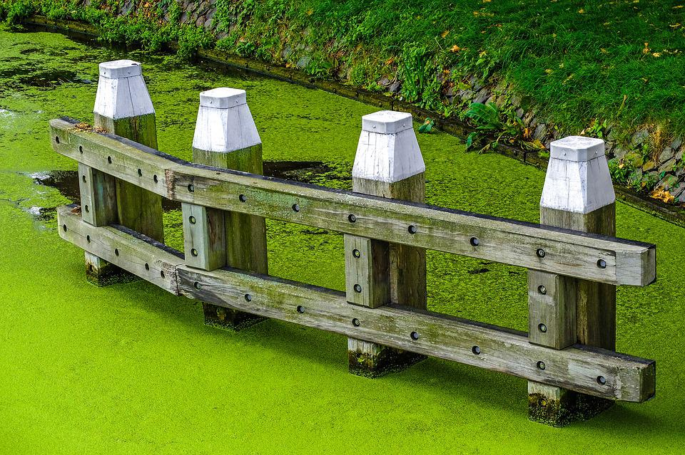 Canal, Water, Froth, Alga, Pier, Nature, Outdoor