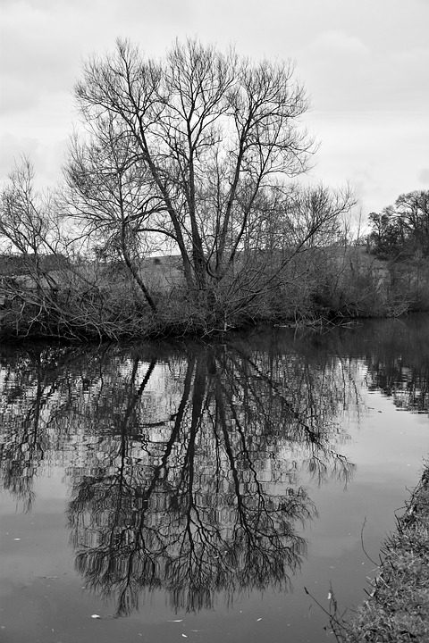 Tree, Black And White, Landscape, Canal, Reflection