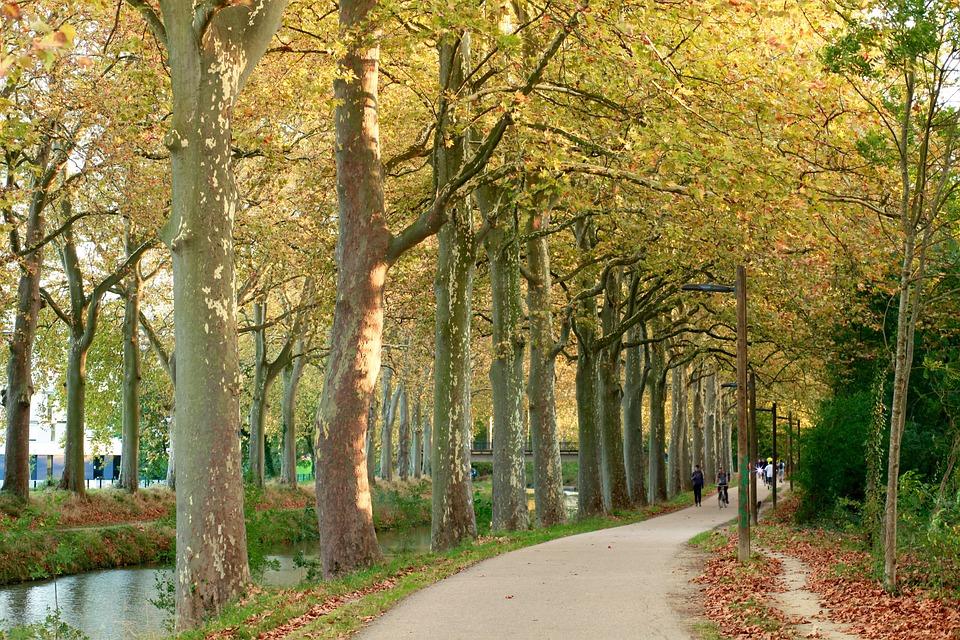 Canaldumidi, Toulouse, Nature, Landscape, Autumn, Tree