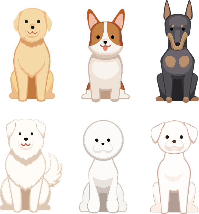 Dogs, Pet, Domestic, Canine, Mammal, Animal, Breed