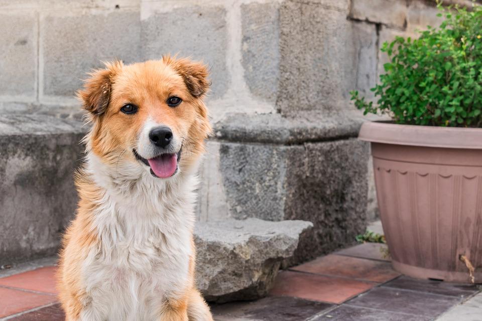 Dog, Love, Friendship, Pet, Animal, Puppy, Cute, Canine