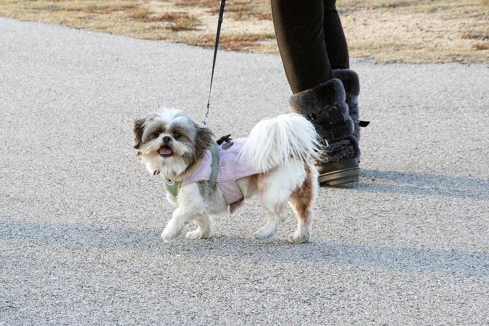Dog, Animal, Pet, Canine, Doggy, Breed, Pedigree