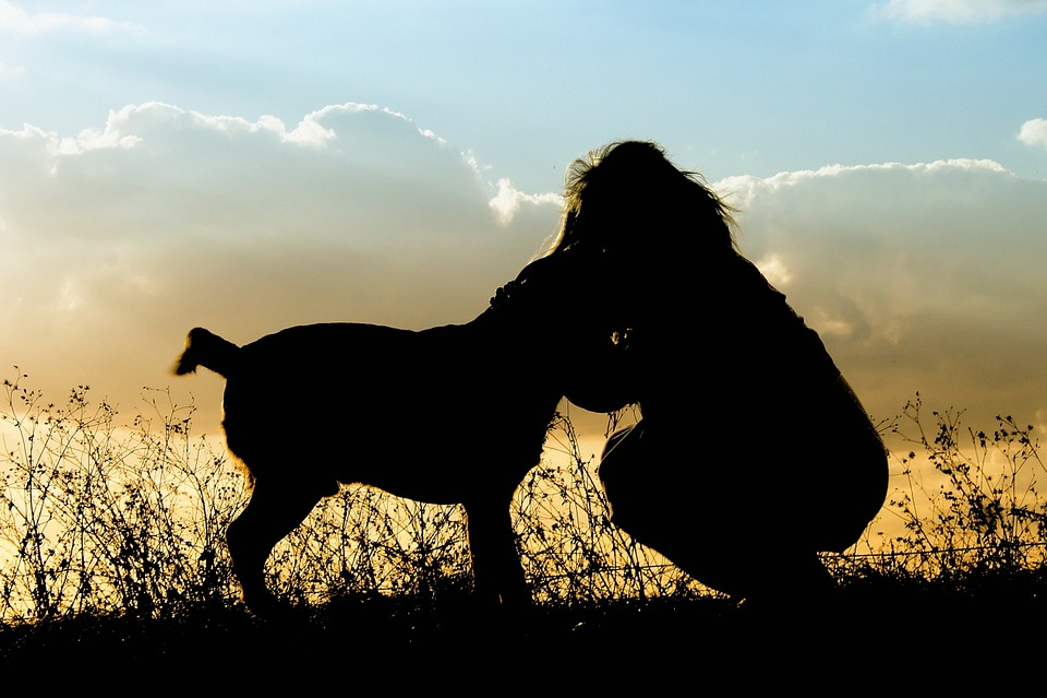 Pets, Dog, Sunset, Girl, Outdoors, Sky, Animal, Canine