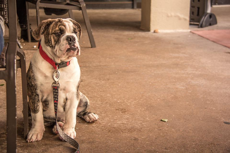 Dog, Animal, Portrait, Mammal, Pet, Canine, Cute