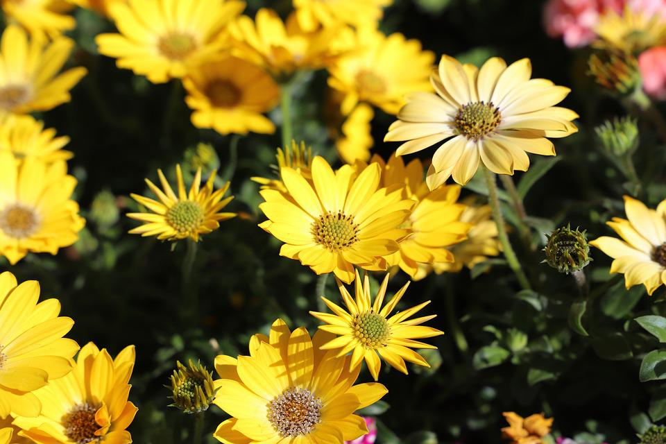 Flower, Plant, Nature, Summer, Floral, Flowers, Cannes