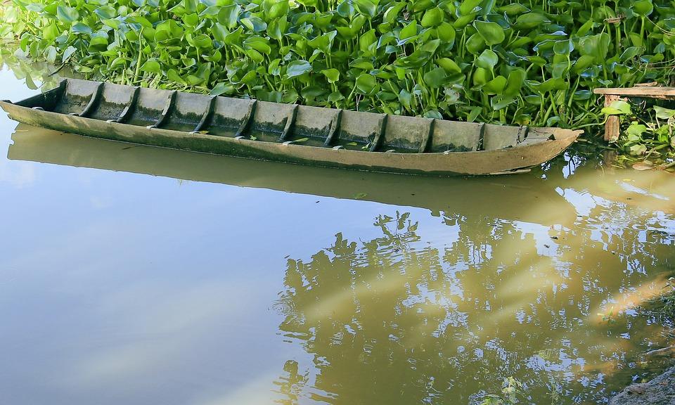 Vehicle, Canoe Wood, Shade