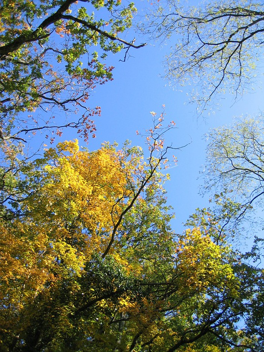 Sky, Trees, Canopy, Branches, Foliage, Leaves, Day