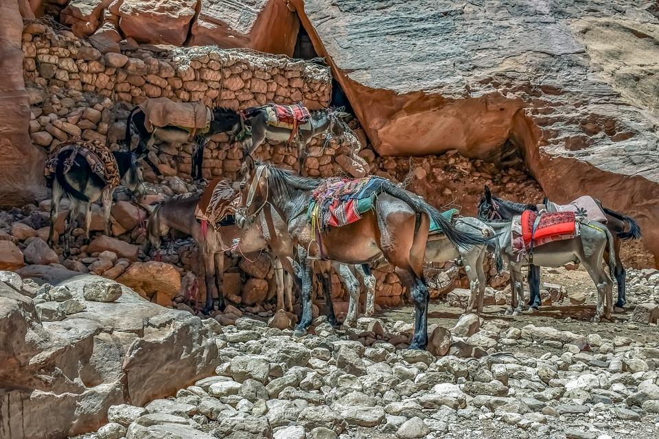 Mules, Donkeys, Transportation, Desert, Canyon, Tourism