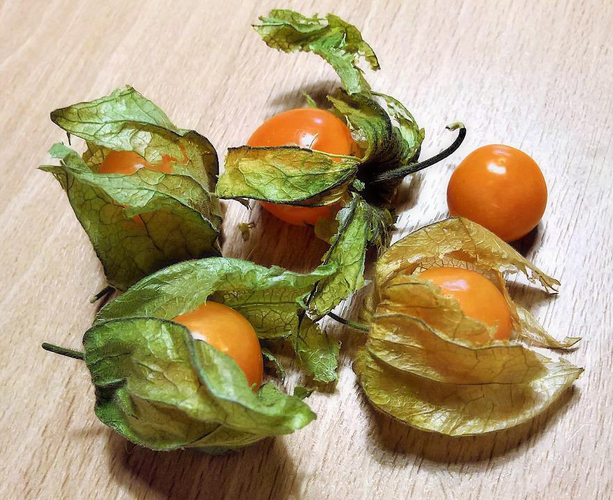 Physalis, Cape Gooseberry, Bladder Cherry