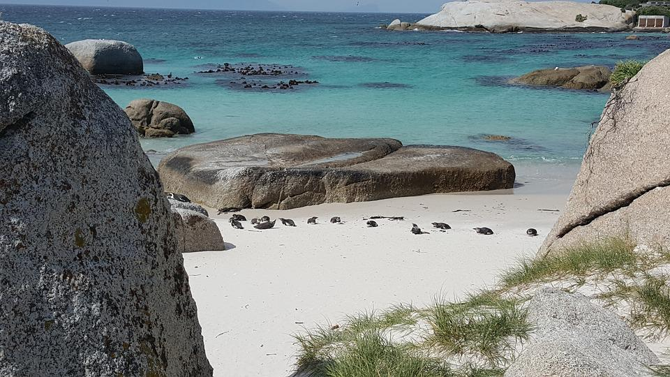 Cape Town, Boulders Beach, Africa, Ocean, Nature, Sand