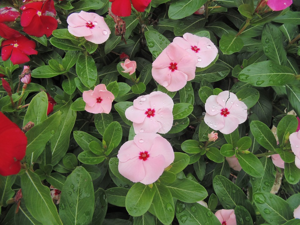 Flowers, Garden, Capoeira