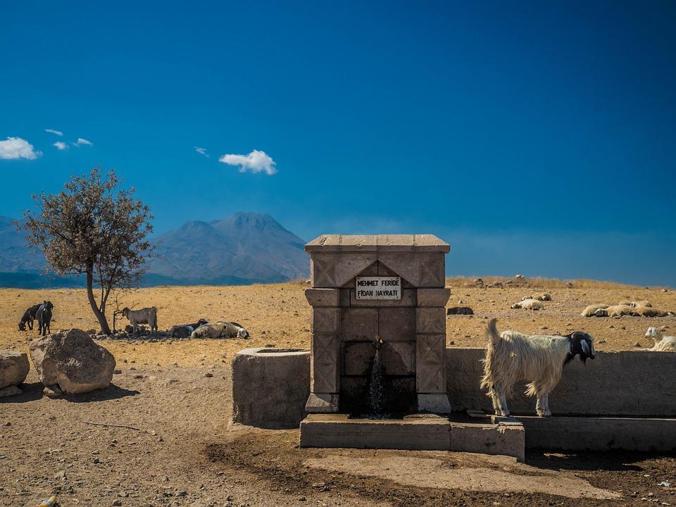 Turkey, Cappadogia, Goat