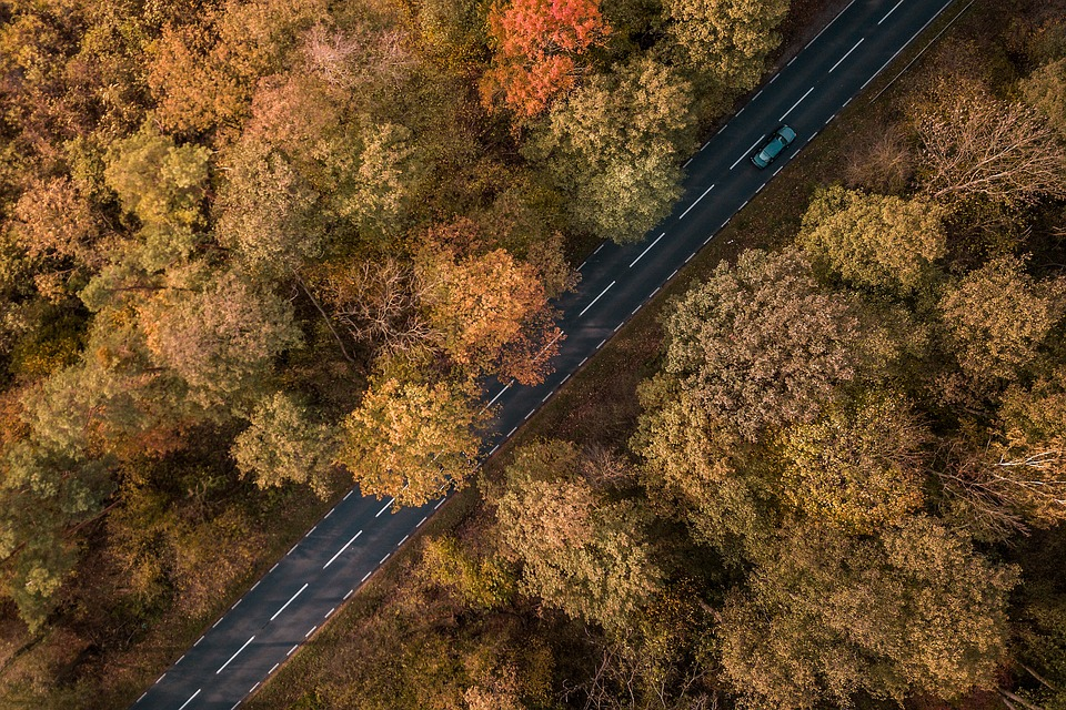 Way, Forest, Tree, Landscape, Forests, Autumn, Car