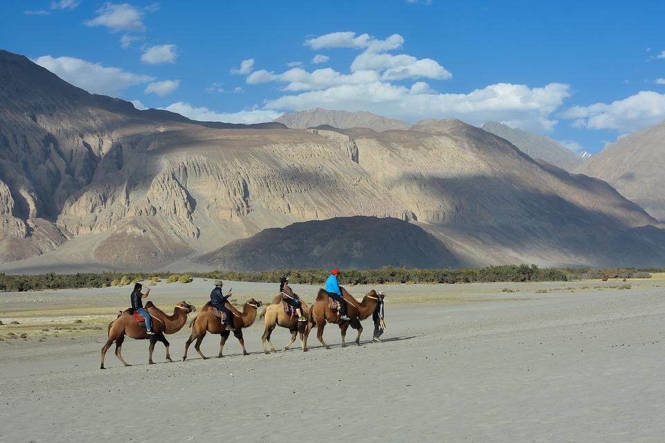 Camel, Valley, Mountain, Caravan, Sand, Desert, Nature