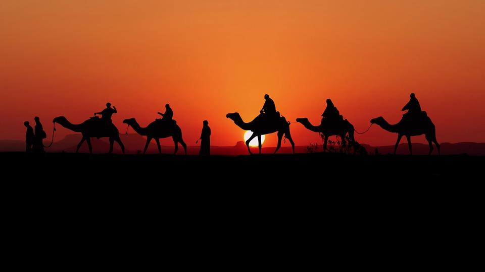 Camels, Sunset, Caravan, Desert, Silhouette, Nature