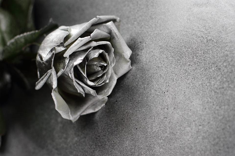 Alive, Art, Background, Beautiful, Card, Closeup, Cold