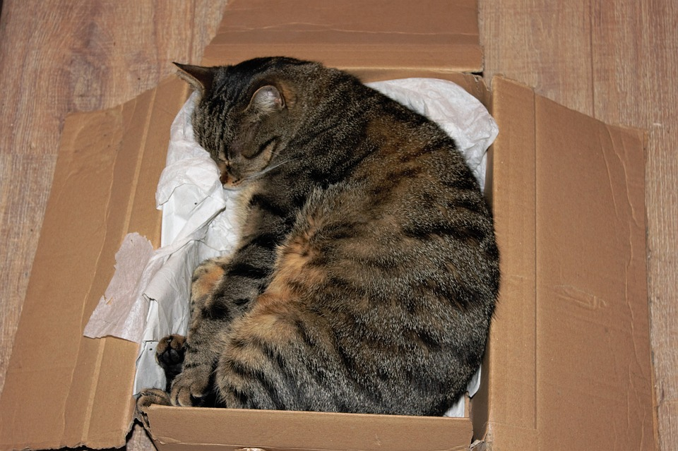 Cat, Cardboard, Domestic Cat, Box, Relax, Rest